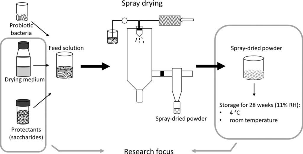 Fig spray drying